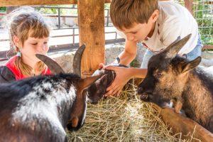 Enfants a la ferme