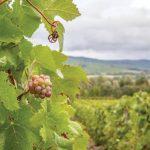 Champagne - Mater et Filii Ouest de PariChampagne - Mater et Filii Ouest de Pariss