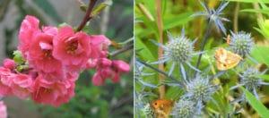 De la Fleur au jardin a Orgeval
