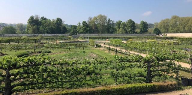 Le Potager du roi de Versailles