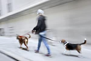 promenade animaux ouest de paris