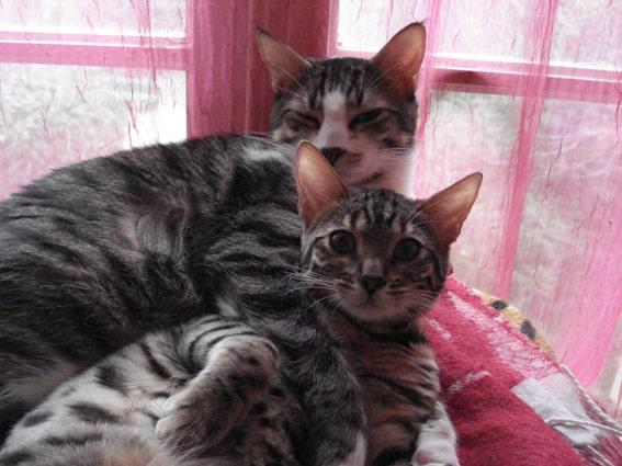 cat sitting doggies et compagnie