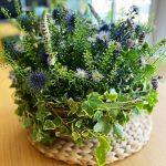 Mon panier a fleurs - Saint Germain en Laye Fourqueux