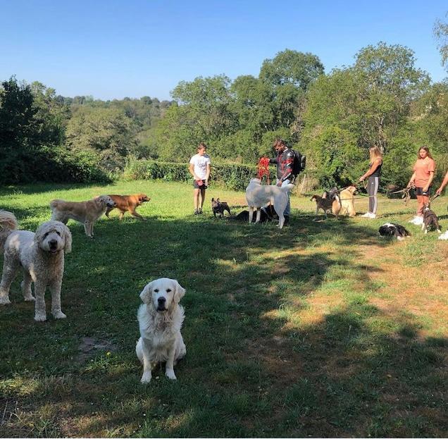 Doggies et compagnie Promenades de chiens