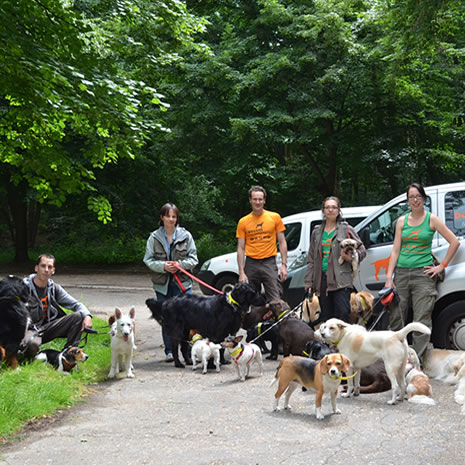 Garde chien et chat Doggies et compagnie