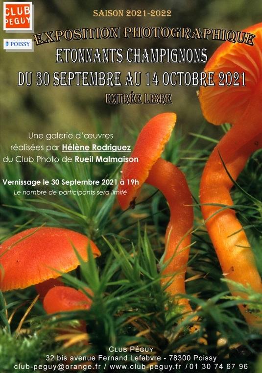 Exposition de photo de champignons poissy Hélène Rodrigyez